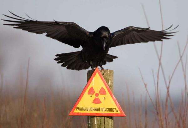 Pripyat - Aves en Chernobil