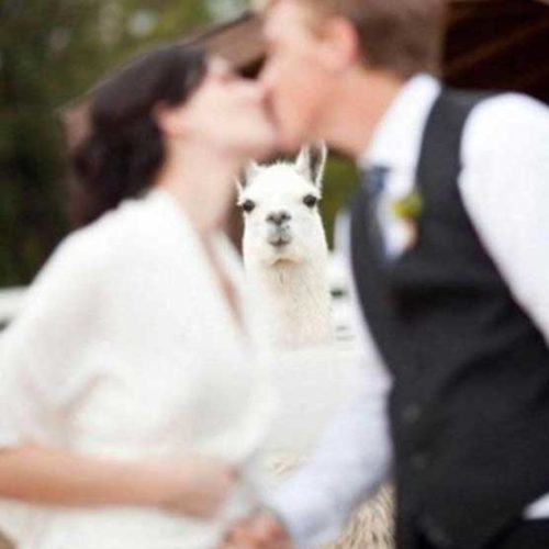 hola que hace, se casa o que?