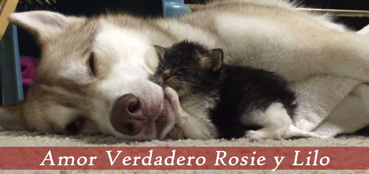 Rosie y Lilo