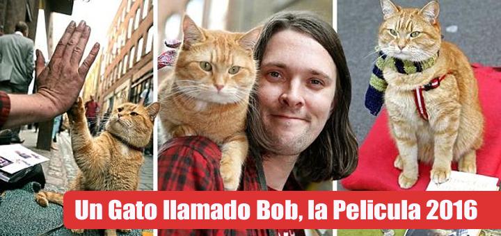 un gato llamado bob